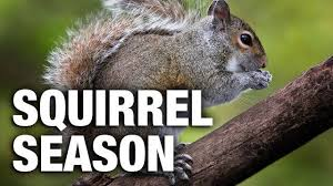 squirrel season